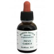 Macerato idrogliceroalcolico di Ficus carica