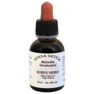 Macerato idroalcolico di Ribes nero