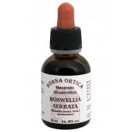 Macerato idroalcolico di Boswelia serrata